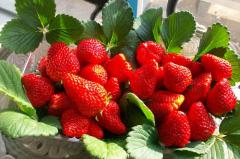草莓生鲜冷藏库建造特点