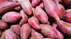 红薯可以用保鲜生鲜冷藏库储存吗?