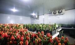 做一个50平方米的鲜花保鲜冷库安装需要多少钱