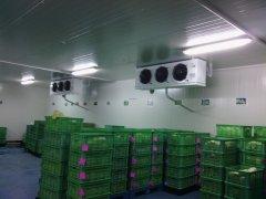 2000平方蔬菜保鲜冷库设计工艺以及造价预算